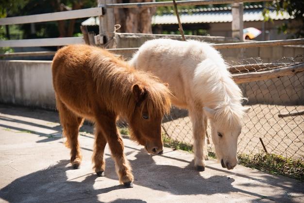 Pony carino nello zoo