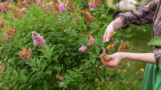 Potatura del giardino