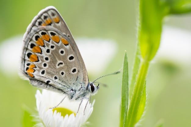 Prato bella primavera con sfondo di farfalla