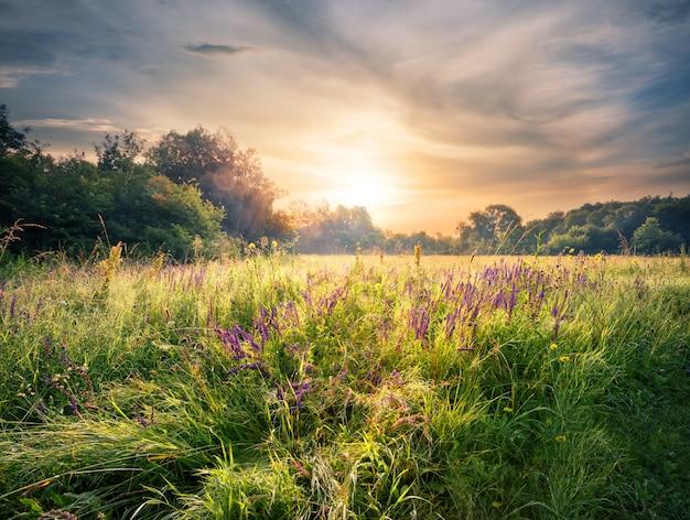 Prato con fiori di campo sotto il sole al tramonto