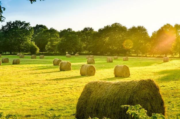 Prato del terreno coltivabile con la balla di paglia al tramonto. bretagna, francia