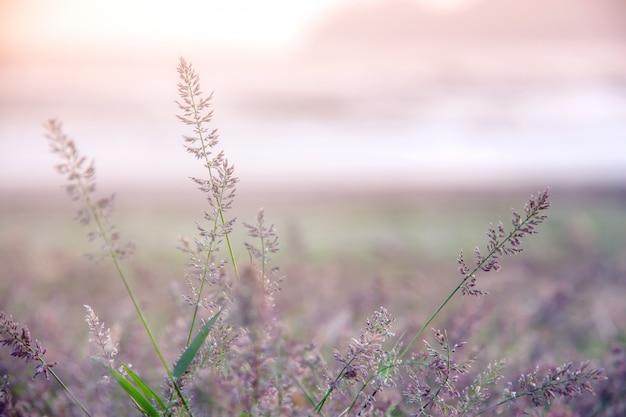 Prato della foresta con le erbe selvatiche, immagine a macroistruzione con piccola profondità di campo, fondo della sfuocatura