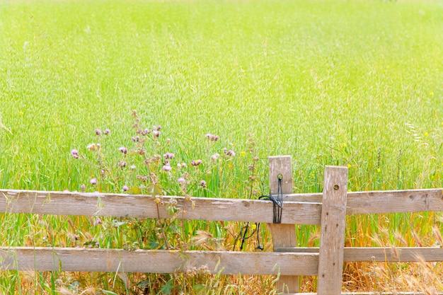 Prato verde delle baleari a formentera e recinzione in legno