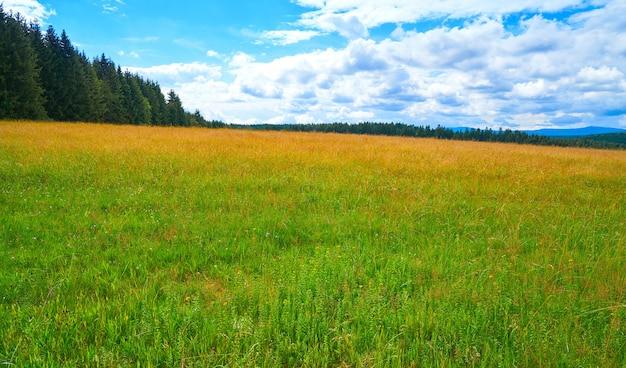 Prato verde nella foresta di harz della germania