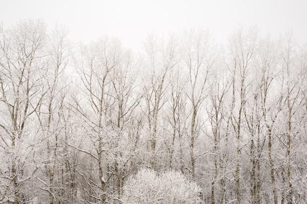 Precipitazioni nevose in foresta con la brina, spazio della copia