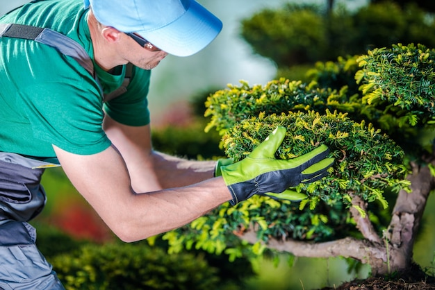Prendersi cura degli alberi da giardino