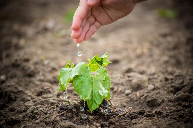 Prendersi cura di una nuova vita. annaffiare le giovani piante le mani del bambino. messa a fuoco selettiva