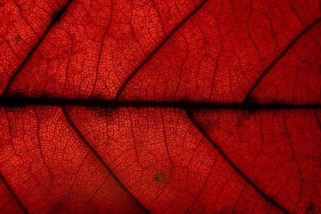 Prendi motivi ravvicinati e foglie rosse sullo sfondo