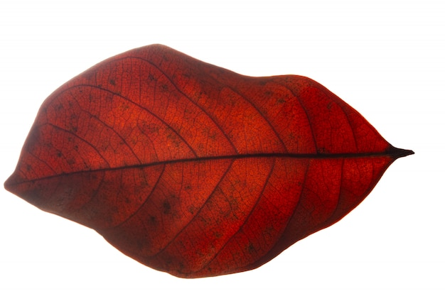Prendi motivi ravvicinati e foglie rosse