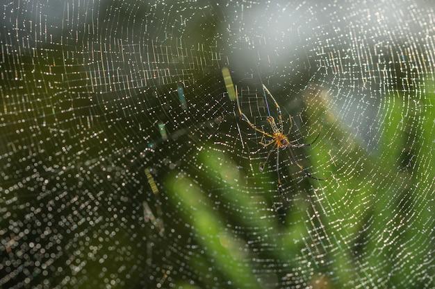 Prendi un ragno ravvicinato su una ragnatela