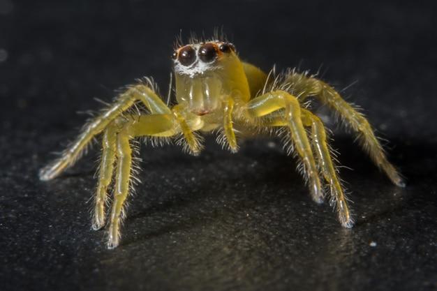 Prendi un ragno ravvicinato