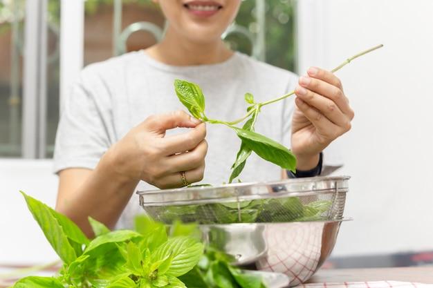 Preparazione dell'alimento con la mano della donna che pizzica la foglia del basilico in tavolo da cucina.