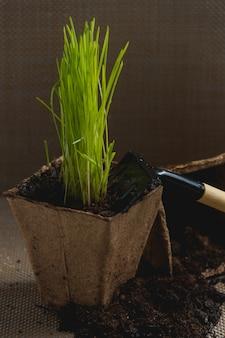 Preparazione per il trapianto stagionale della pianta