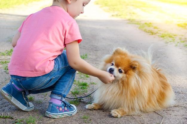 Preschooler kid girl training, giocando con il cane per strada. il bambino insegna l'obbedienza allo spitz. bambino che cammina con animali al guinzaglio. spitz che esegue il comando di sdraiarsi.