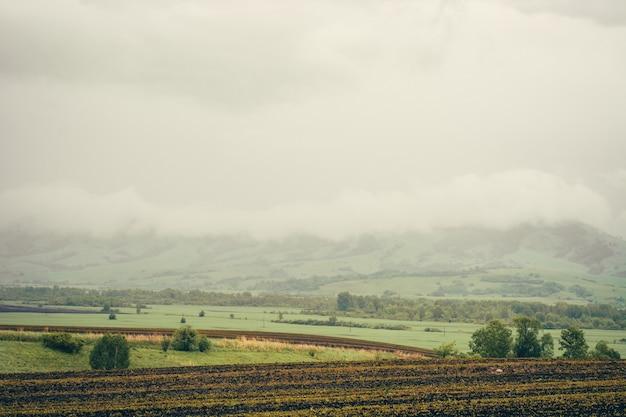 Primavera campi verdi con colture piantate tra le colline.