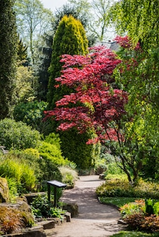 Primavera in giardino inglese pubblico