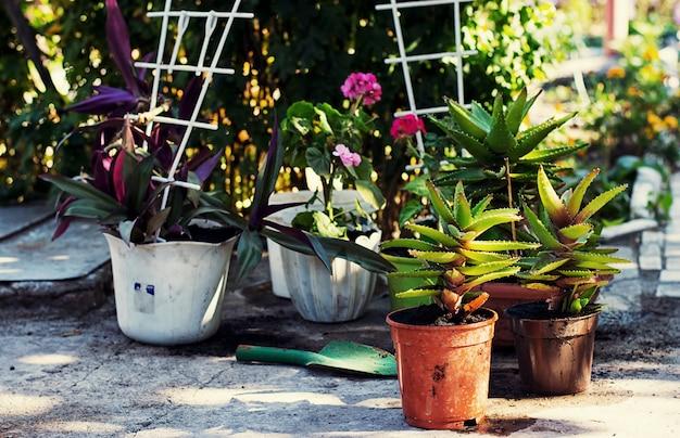 Primavera, piante, la cura