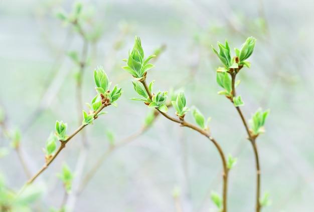 Prime foglie di primavera su sfondo sfocato verde
