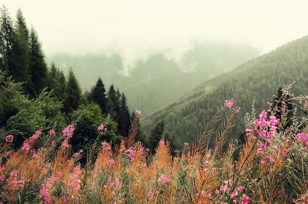 Primi fiori primaverili sulle montagne delle alpi