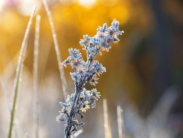 Primo gelo. gelo sulle foglie.