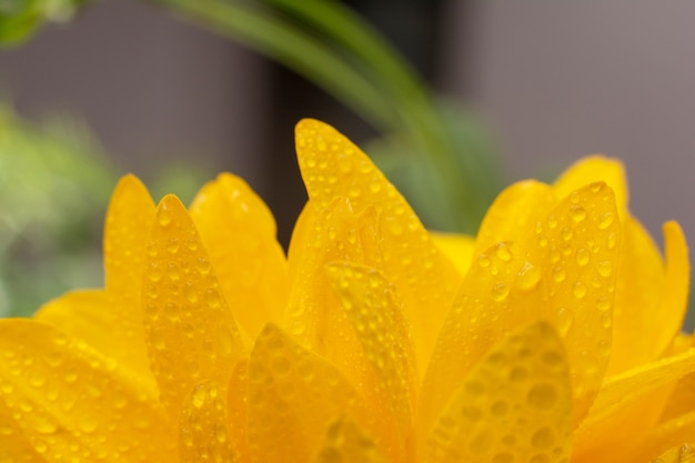 Primo piano dei fiori di rudbeckia.