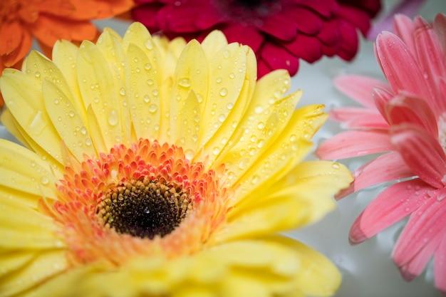 Primo piano dei fiori variopinti che galleggiano sulla priorità bassa dell'acqua
