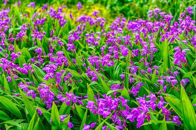 Primo piano dei fiori viola in un giardino verde