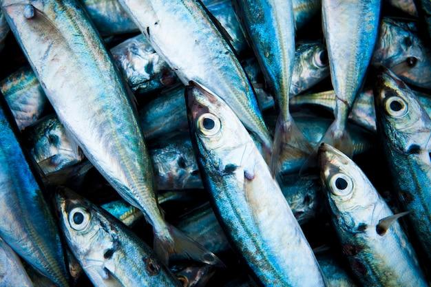 Primo piano dei pesci pescati freschi