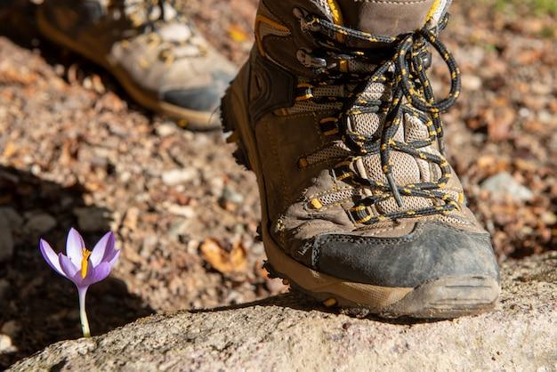 Primo piano dei piedi della viandante nella montagna con il fiore