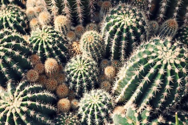 Primo piano del cactus verde