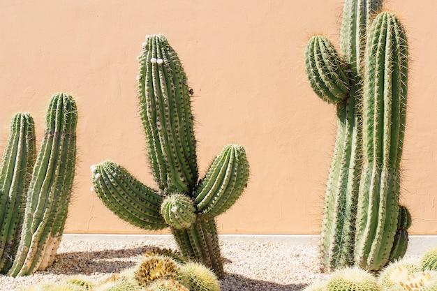 Primo piano del campo di cactus