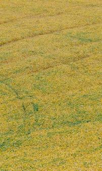 Primo piano del campo di soia