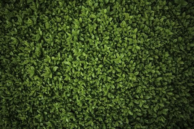 Primo piano del cespuglio verde