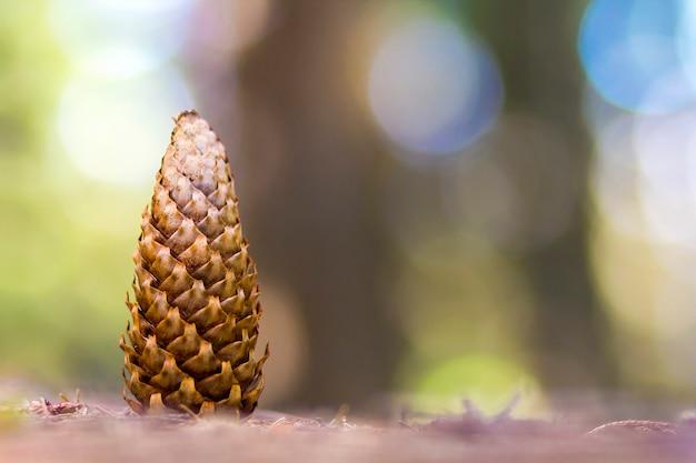 Primo piano del cono di pino con fondo vago variopinto.