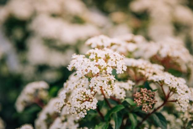 Primo piano del fiore bianco in primavera