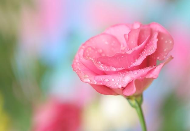 Primo piano del fiore di lisianthus