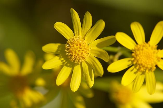 Primo piano del fiore giallo