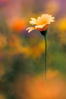 Primo piano del fiore