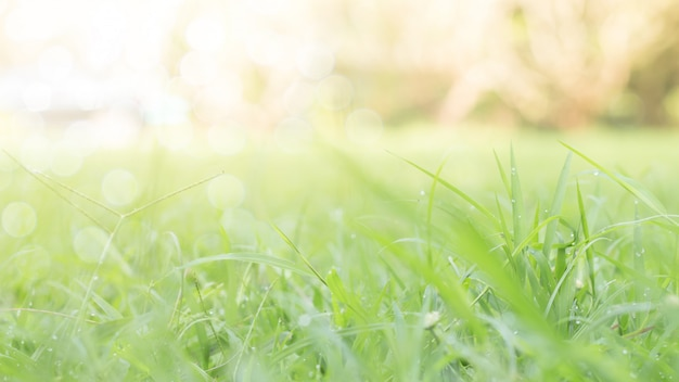 Primo piano del foglio verde su priorità bassa vaga in giardino