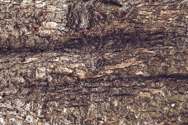 Primo piano del fondo di legno di struttura