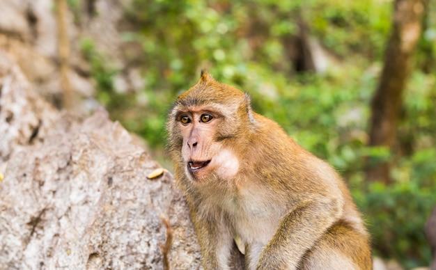 Primo piano del fronte della scimmia in una priorità bassa della natura.