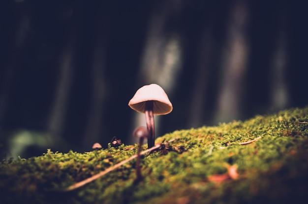 Primo piano del fungo