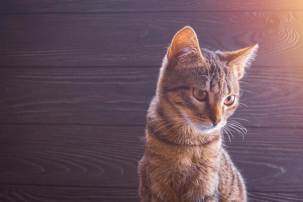 Primo piano del gattino su un fondo di legno con lo spazio della copia