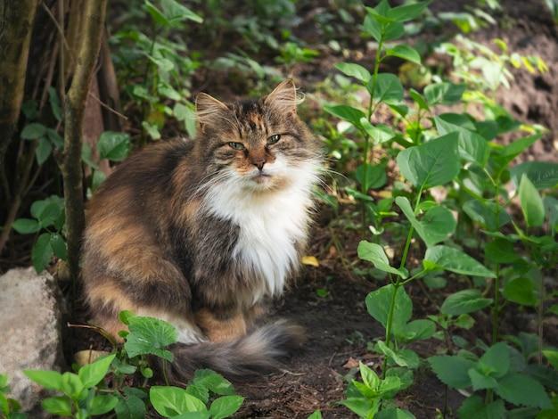 Primo piano del gatto di strada senza casa. il concetto di proteggere gli animali randagi. sfondo urbano abbandonato.