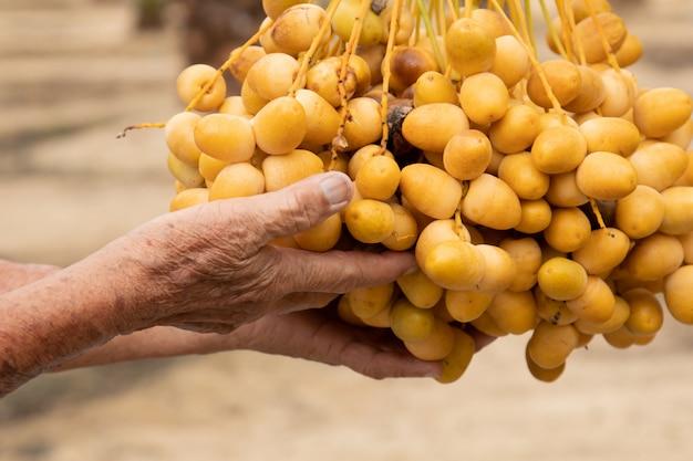 Primo piano del giardiniere prendersi cura della piantagione di palme da dattero