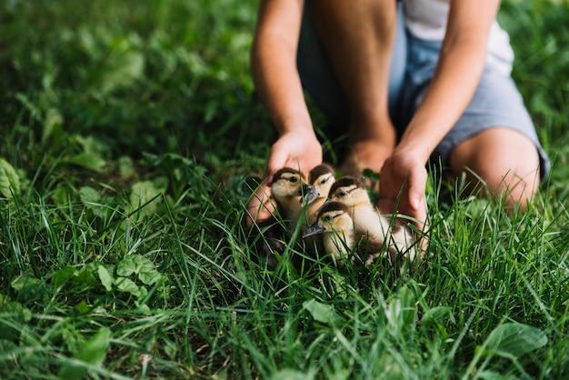 Primo piano del ragazzo che gioca con gli anatroccoli su erba verde