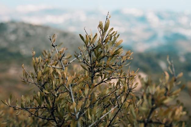 Primo piano del ramo di albero con le foglie verdi