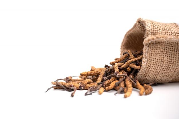 Primo piano del sinensis di ophiocordyceps o cordyceps del fungo nella borsa del sacco di brown sull'isolato su