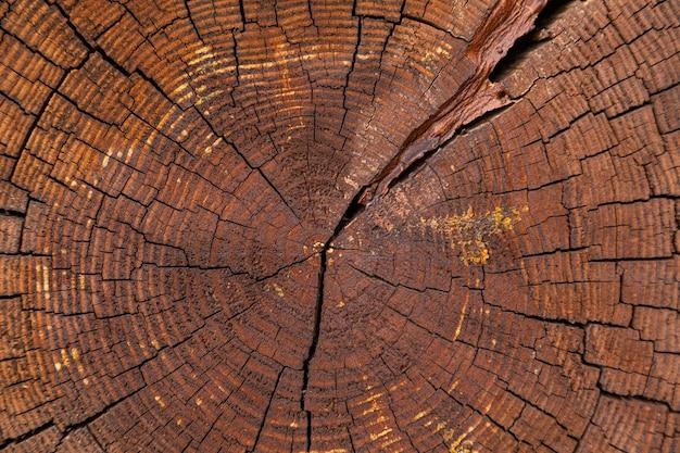 Primo piano del taglio dell'incrocio dell'albero asciutto con gli anelli annuali
