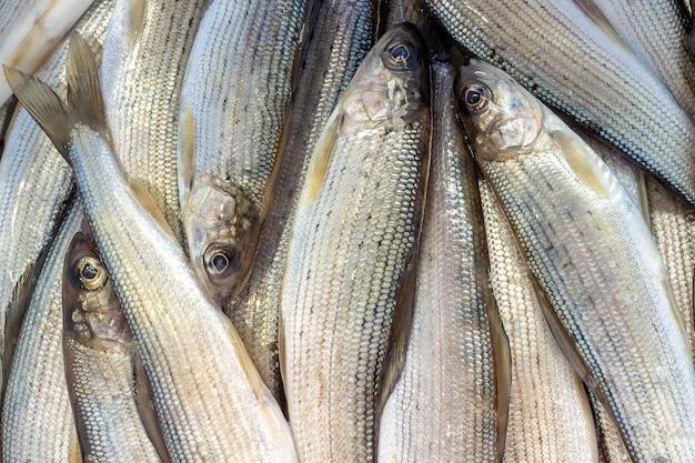 Primo piano del temolo del pesce del fiume siberiano